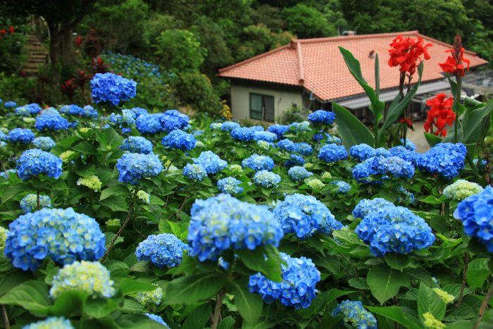 People Driving By On Their Way To Expo Park In Motobu Are Invited To Drop  By And Visit. The Garden Is Open Most Days, And The Admission Is A Modest  ¥400 For ...